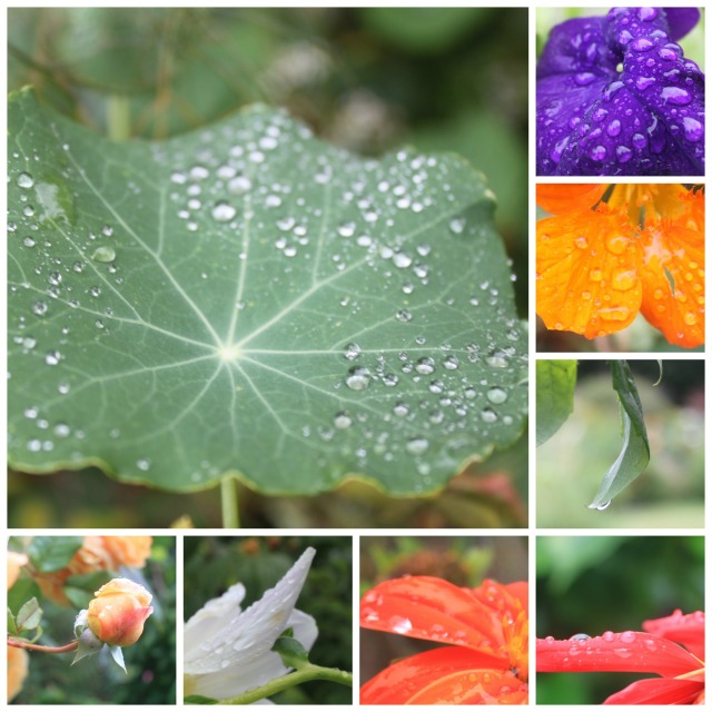 raindrops collage